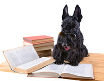 Dog with books Stock Image