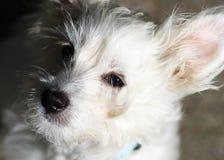 Dog - Boomer Stock Image