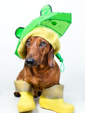 Dog in boots. Dog in yellow boots and hat royalty free stock photo