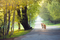 Dog walking in the spring park Stock Image