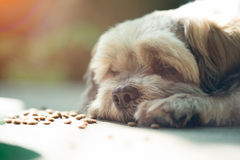 Dog bored with food Royalty Free Stock Photo