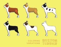 Dog Boston Terrier Coloring Variations Vector Illustration Stock Images