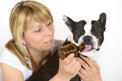 Dog Boston Terrier at veterinarian Stock Images