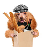 Dog with a bottle of wine and a baguette Stock Image