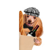 Dog with a bottle of wine and a baguette Stock Photos