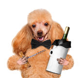 Dog with a bottle of wine Stock Photos