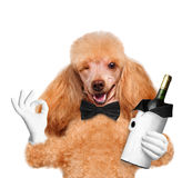 Dog with a bottle of wine Royalty Free Stock Photography