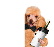 Dog with a bottle of wine Royalty Free Stock Photos
