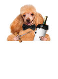 Dog with a bottle of wine Stock Image