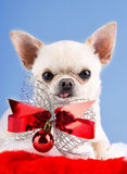 Dog with bow Stock Photo