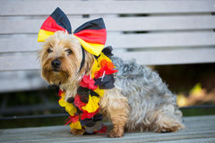 Dog with bow in Germany colors Stock Image