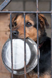Dog with bowl Royalty Free Stock Photo