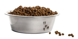Dog bowl with croquettes full to the brim. Isolated on white stock images