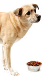 Dog and a bowl of food stock photo