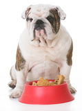 dog with a bowl full of bones Stock Photography