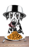 Dog with a bowl on his head is going to eat. Meat Royalty Free Stock Photos