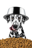 Dog with a bowl on his head is going to eat. Something stock images