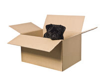 Dog in a box Royalty Free Stock Images