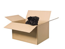 Dog in a box Stock Images