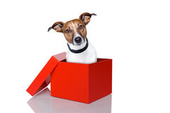 Dog in box Stock Photography