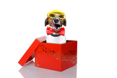 Dog in box Royalty Free Stock Images