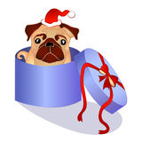 Dog in the box - christmas present Royalty Free Stock Image