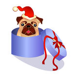 Dog in the box - christmas present Royalty Free Stock Photography