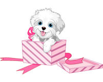 Dog in box. Cute puppy inside gift boxes stock illustration