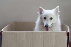 Dog in a box Stock Photo