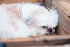 A dog on the box. A dog on the box looking Royalty Free Stock Photography