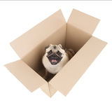 Dog in a box. Stock Images