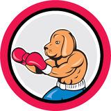 Dog Boxer Boxing Circle Cartoon Royalty Free Stock Images