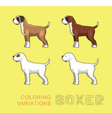 Dog Boxer Coloring Variations Vector Illustration Royalty Free Stock Photo