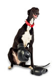 Dog in boxing gloves Stock Image