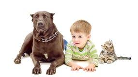 Dog, boy and kitten. Lying on white background Royalty Free Stock Image