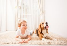 Funny dog games. The dog and the boy are playing together Stock Photos