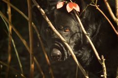 Dog in branches on sunny day stock images