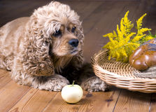 Dog and breakfast Stock Images