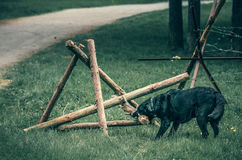 Dog breaks a wooden barrage. With barbed wire Royalty Free Stock Image