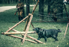 Dog breaks a wooden barrage. With barbed wire Royalty Free Stock Photography