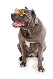 Dog breed Stock Photos