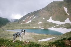 Dog breed border collie on the background of a beautiful beautiful landscape stock image