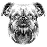 Dog breed Brussels Griffon Stock Photo