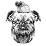 Dog breed Brussels Griffon Stock Photos