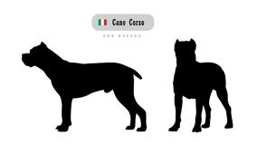 Dog breed Cane Corso stock illustration