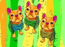 Dog breed cute pet animal bulldog french vector Stock Image