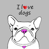 Dog breed cute pet animal bulldog french Stock Photos