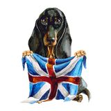Dog breed dachshund holds in his hands the flag of Great Britain. london. Isolated on white background. english royalty free illustration