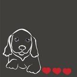 Dog breed dachshund Royalty Free Stock Photos
