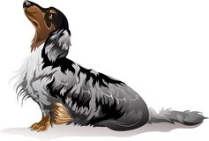 Dog breed dachshund. Vector illustration dog breed dachshund Royalty Free Stock Image